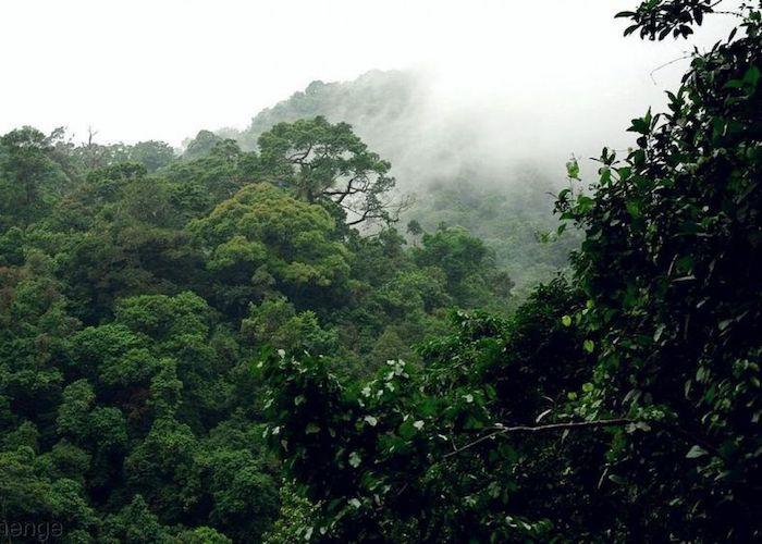 Climat|Comment les arbres pourraient sauver la planète