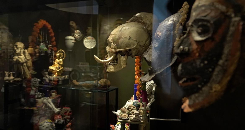 Visite des coulisses du Musée de l'Homme