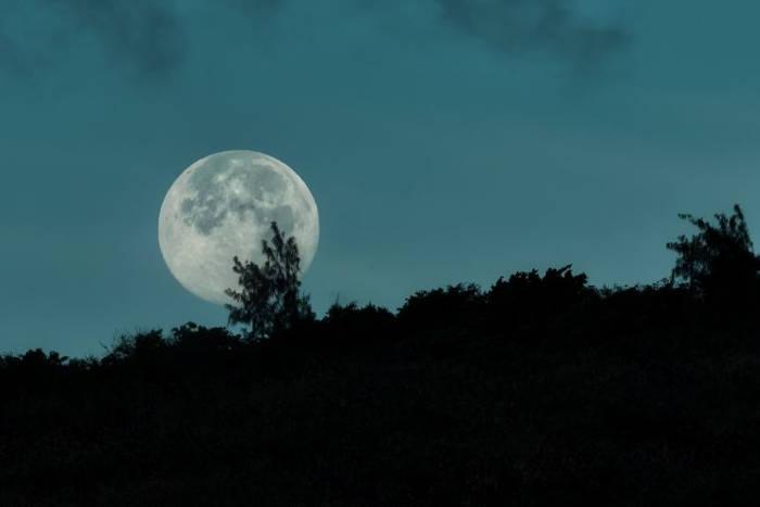 Le clair de lune perturbe l'horloge circadienne des caféiers