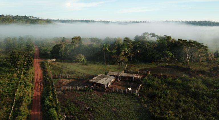 TerrAmaz : un partenariat inédit qui concilie lutte contre la déforestation et développement en Amazonie