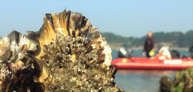 Petit déjeuner sur l'impact de la pollution au plastique sur les organismes marins