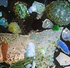 Pollution plastique : du constat aux solutions, la recherche mobilisée