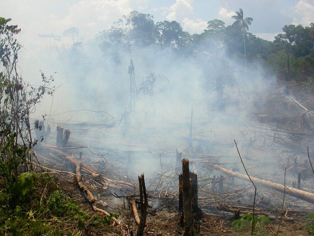 une-cartographie-sans-precedent-revele-une-perte-de-220-millions-d-hectares-de-forets-tropicales-humides-depuis-1990-ade38d83